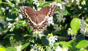 !butterfly